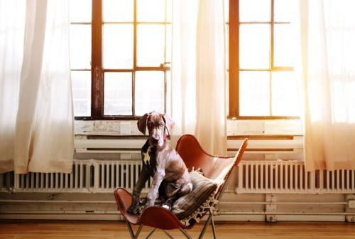 """Casa """"calda"""": ecco cinque modi per riscaldare i nostri ambienti"""