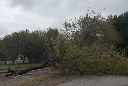 Maltempo a Senigallia: strage di alberi per il vento che ha spazzato la città