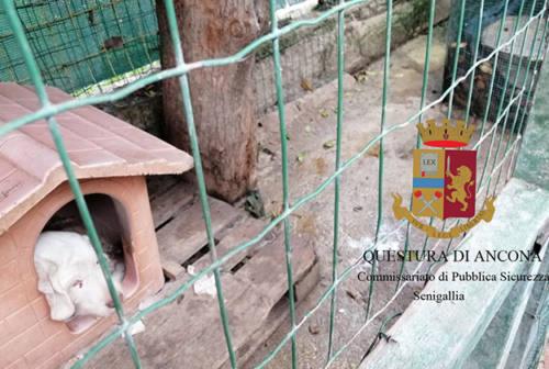 Rifugi angusti e pieni di escrementi: cani maltrattati a Senigallia