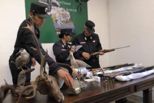 """Due bracconieri denunciati a Sassoferrato e Cupramontana. Sequestrati """"lacci"""" e 10 fucili"""