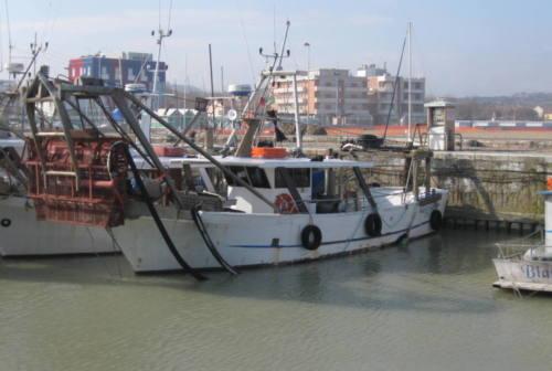 Proroga alla pesca delle vongole lupino. Sospiro di sollievo per le imprese ittiche delle Marche