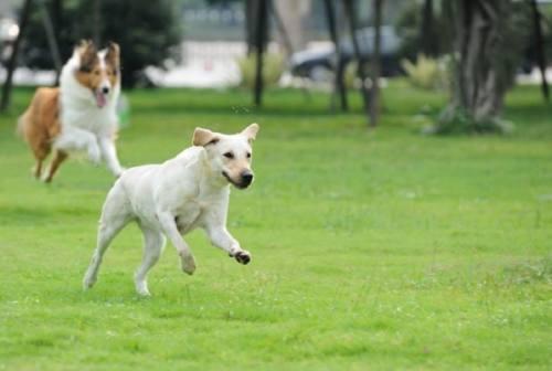 Senigallia, cani abbaiano nell'area di sgambatura. I residenti: «Fate in modo che non tornino i bocconi avvelenati»