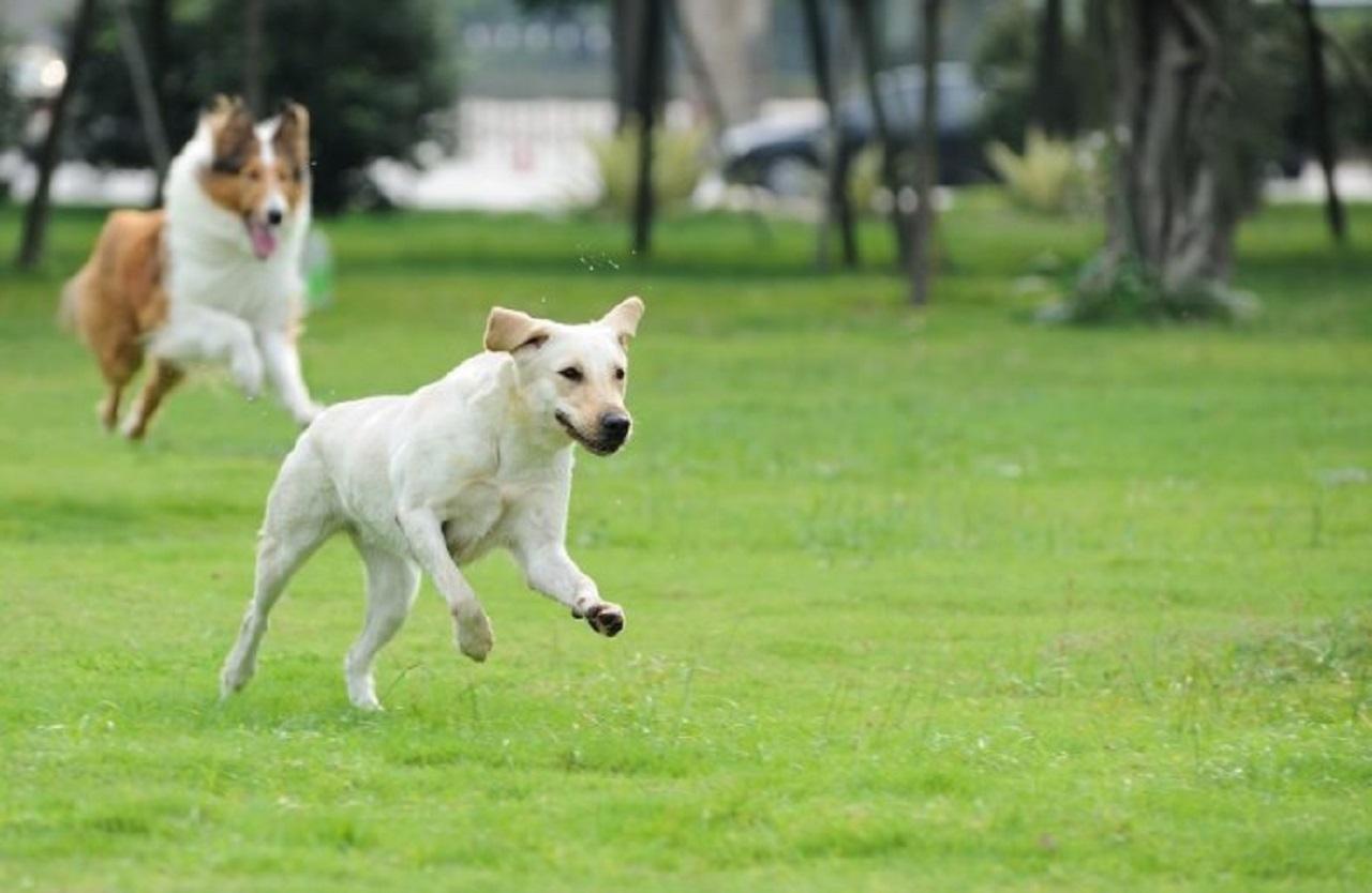 cani, animali da affezione, amici a quattro zampe