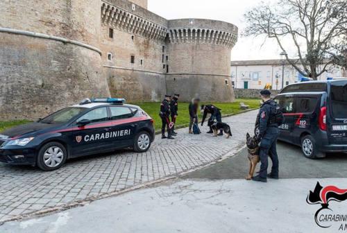 Controlli antidroga nelle scuole e in centro a Senigallia, due denunce
