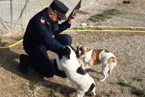 Cuccioli salvati dai carabinieri Forestali trovano una nuova casa: al via l'asta