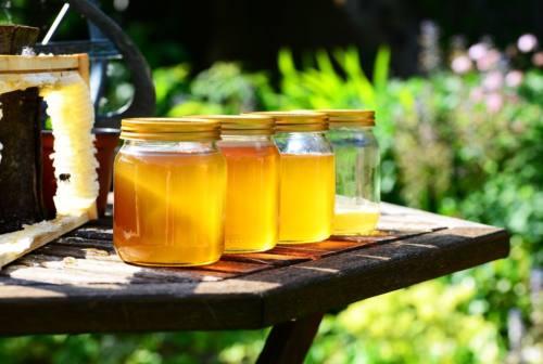 Millefiori, castagno, tiglio acacia e rosmarino: ad ognuno il suo miele, dolce e nutriente