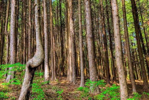 Forest-bathing: i bagni di foresta che fanno bene a corpo e spirito. Ecco dove farli