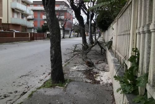 Vento forte su Senigallia. Rami spezzati e cestini ribaltati in strada
