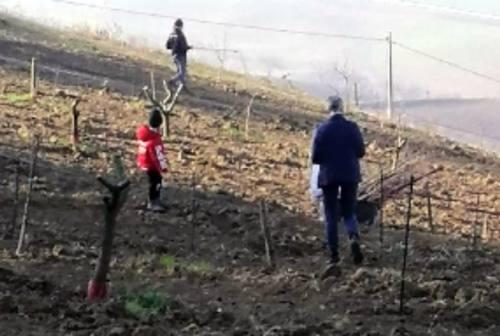 """Dopo l'atto vandalico, riparte l'azienda agricola """"Cantine del Cardinale"""" di Serra de' Conti"""