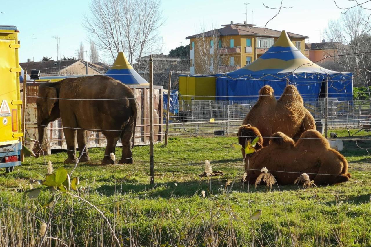Gli animali del circo a Senigallia