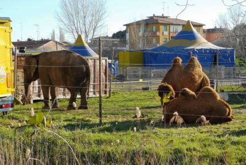 Circhi con animali: bocciata la consulta, regolamento rinviato