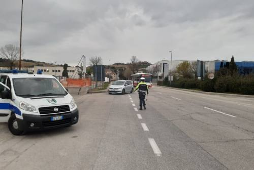 Da Cupra Marittima ad Ancona per acquistare delle piante, denunciata una coppia