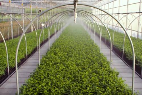 Agricoltura e fase due, Coldiretti: «Riporterà in alto il valore delle nostre aziende»
