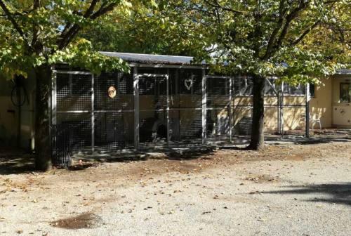 Il canile sanitario di Senigallia si trasforma in rifugio per gli animali