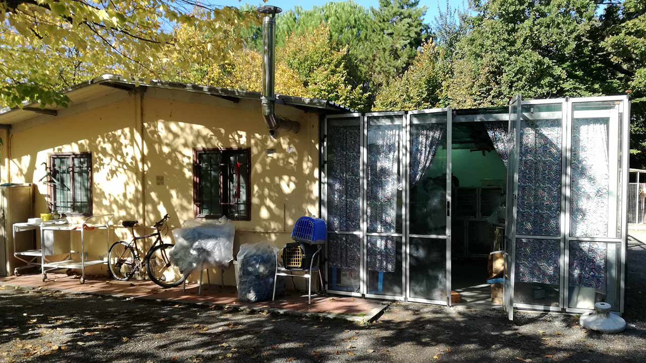 Il canile a Borgo Bicchia di Senigallia è anche oasi felina per ospitare e far adottare i gatti