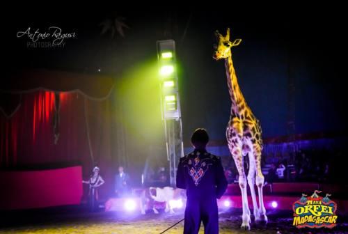 Emergenza sanitaria: circo bloccato ad Ancona, artisti e animali in difficoltà. Arriva la Protezione civile
