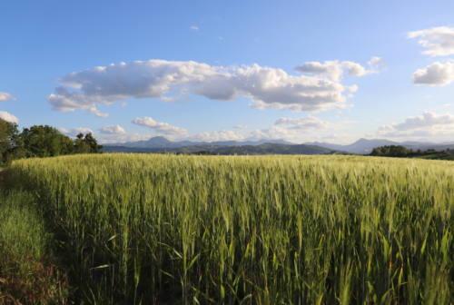Coldiretti: le Marche tra le regioni più green d'Europa