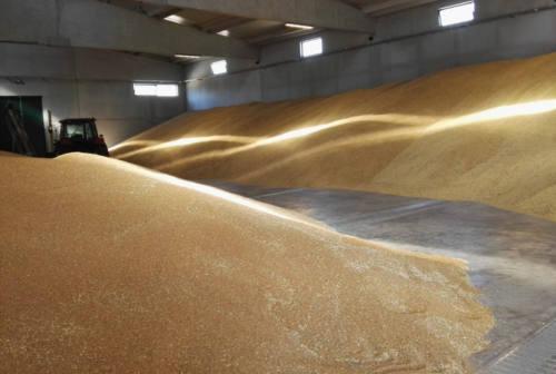 Consorzio Agrario Ancona sempre in crescita, trainato dalla ripresa del prezzo del grano