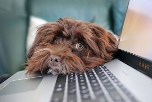 Giornata del cane in ufficio: con le giuste regole è un vantaggio per tutti