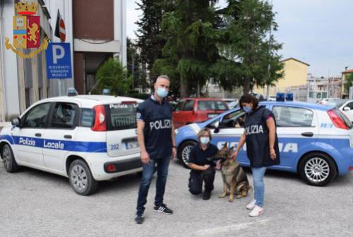 Ascoli Piceno, spaccia cocaina nell'officina: arrestato un insospettabile 36enne