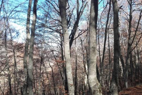 Forest bathing, la pratica dagli effetti benefici per il rilancio dei Monti Sibillini
