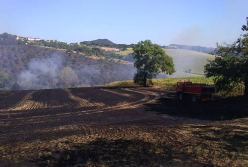 Osimo, incendio a San Paterniano: a fuoco un campo e le piante di un boschetto