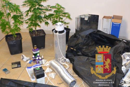 Senigallia, una serra in casa per produrre marijuana: arrestato 25enne