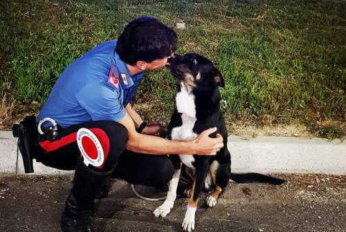 Pesaro, il cane aspetta con i carabinieri l'arrivo del padrone: la storia di Rex