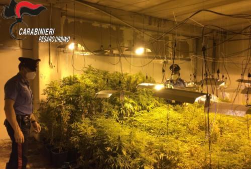 Coltivazione di marijuana in un capannone a Villa Fastiggi: arrestato 25enne
