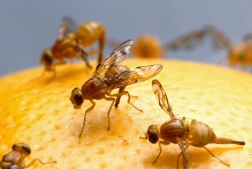 Meningite da insetto, c'è un ricovero. Giacometti: «Benigna, ma attenzione la sera all'aperto»
