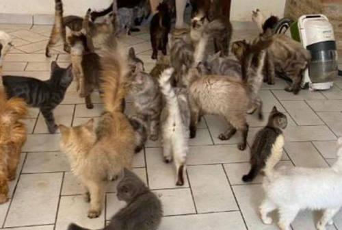 Gatti malati, feriti e affamati: sequestro a Trecastelli