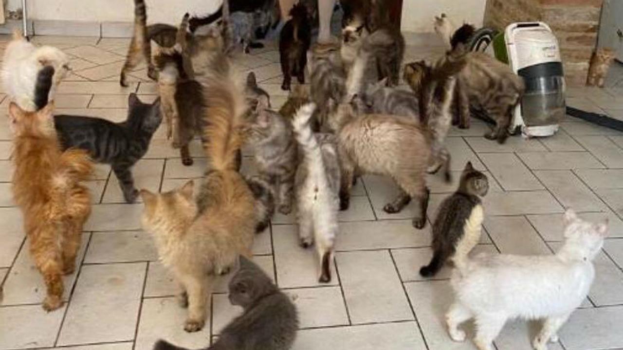 I gatti all'interno dell'appartamento a Trecastelli, trovati da Oipa e Carabinieri forestali