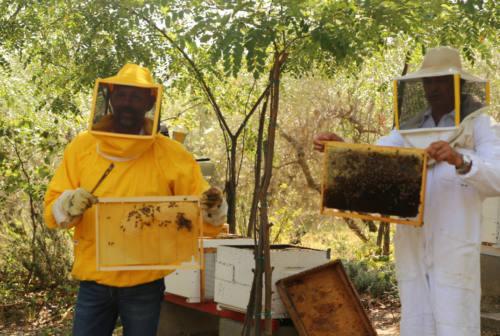 """A Senigallia la salvaguardia dell'ambiente passa anche dalle api attraverso le """"Arnie comunali"""" – FOTO"""