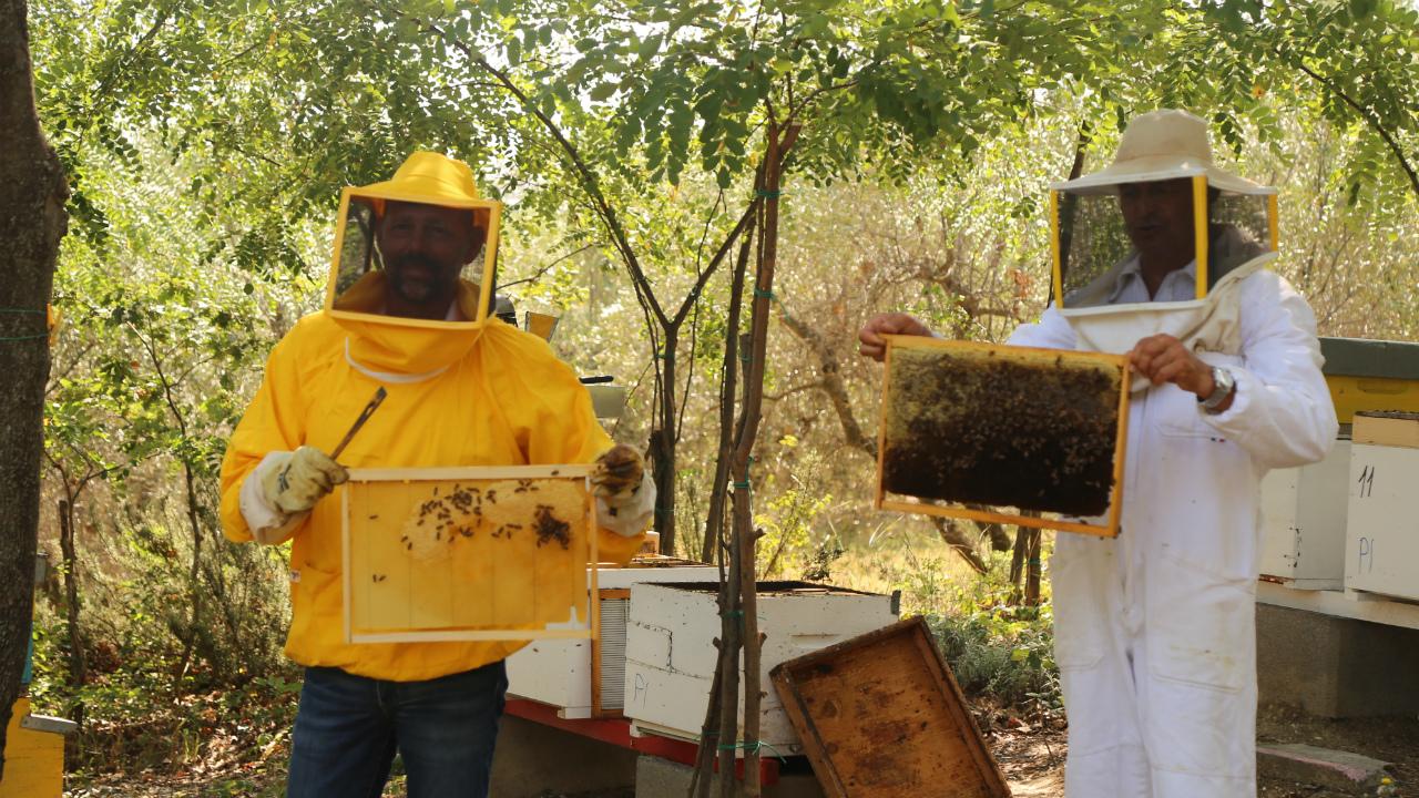 il sindaco Maurizio Mangialardi e l'apicoltore Ivaldo Perini mostrano le Arnie comunali