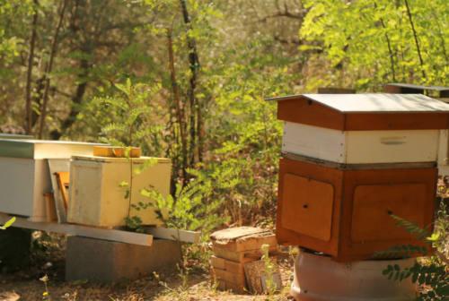 Senigallia, ladri d'api sorpresi a rubare 15 arnie