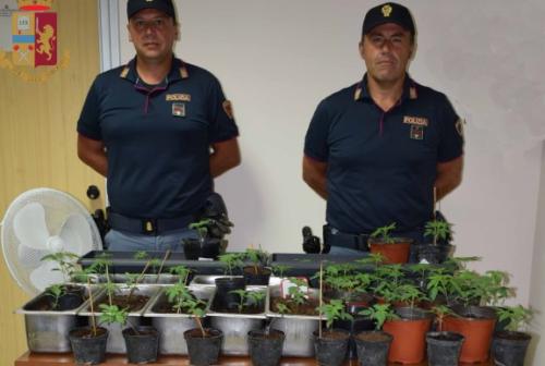 Ascoli, coltivazione artigianale di marijuana in casa: denunciato un 50enne