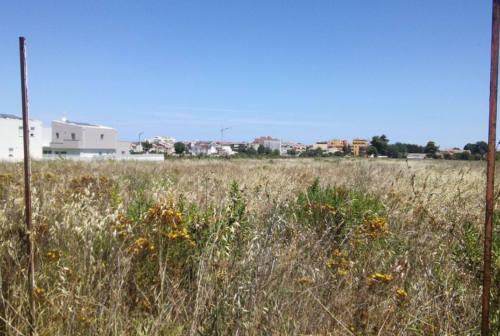 Parco della Cesanella, altre case in arrivo