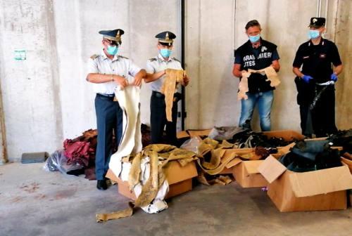 Morrovalle, vendita illegale di pelle di pitone e tartaruga: stroncato giro d'affari di oltre un milione di euro
