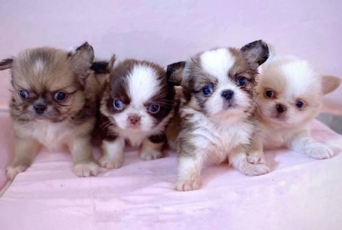 Batterio sospetto nell'allevamento di cani: «In attesa delle analisi non lavoriamo da due mesi»