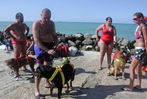 Falconara, cani in spiaggia anche d'estate. Calcina: «Dog beach in ritardo»