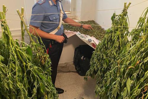 Serra in casa per produrre droga: un arresto e tre denunce a Belvedere Ostrense