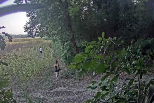 Fano, la cocaina nascosta nel campo di girasoli: arrestata una coppia. In casa la rubrica dei clienti
