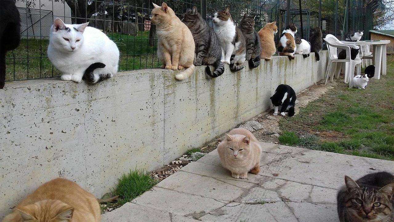 Il micile a Senigallia ospita circa 80 gatti grazie al lavoro dei volontari Gattofili Anonimi