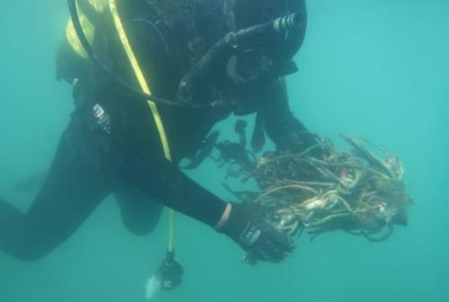 Pesaro, pulizia dei fondali riuscita: raccolti chili di plastica, tubi e lattine