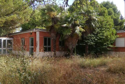 Via delle Mimose, per l'ex asilo e gli alberi si schiera anche una bambina