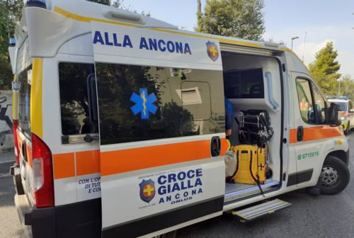 Ancona, punto da un calabrone nell'orto. Anziano in shock anafilattico