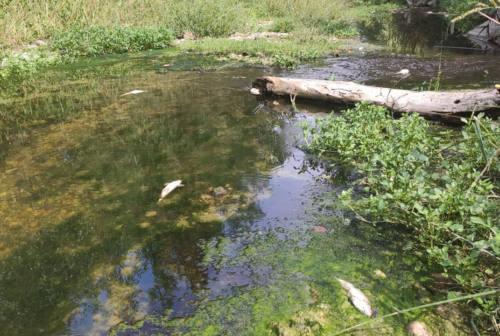 Moria di pesci nel torrente Nevola, prime denunce per inquinamento ambientale