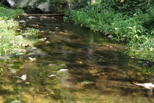 Sversamento di inquinanti nel fiume Nevola a Corinaldo. Principi: «attendiamo sviluppi»