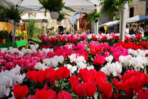 Fano, neanche il Covid ferma la Festa dei Fiori 2020: il Pincio si prepara a fiorire