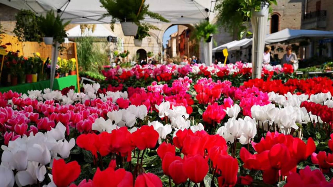 Uno scorcio della Festa dei Fiori 2019 a Fano